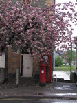 SX21992 Old fashioned letterbox and phonebox underneath blossom.jpg